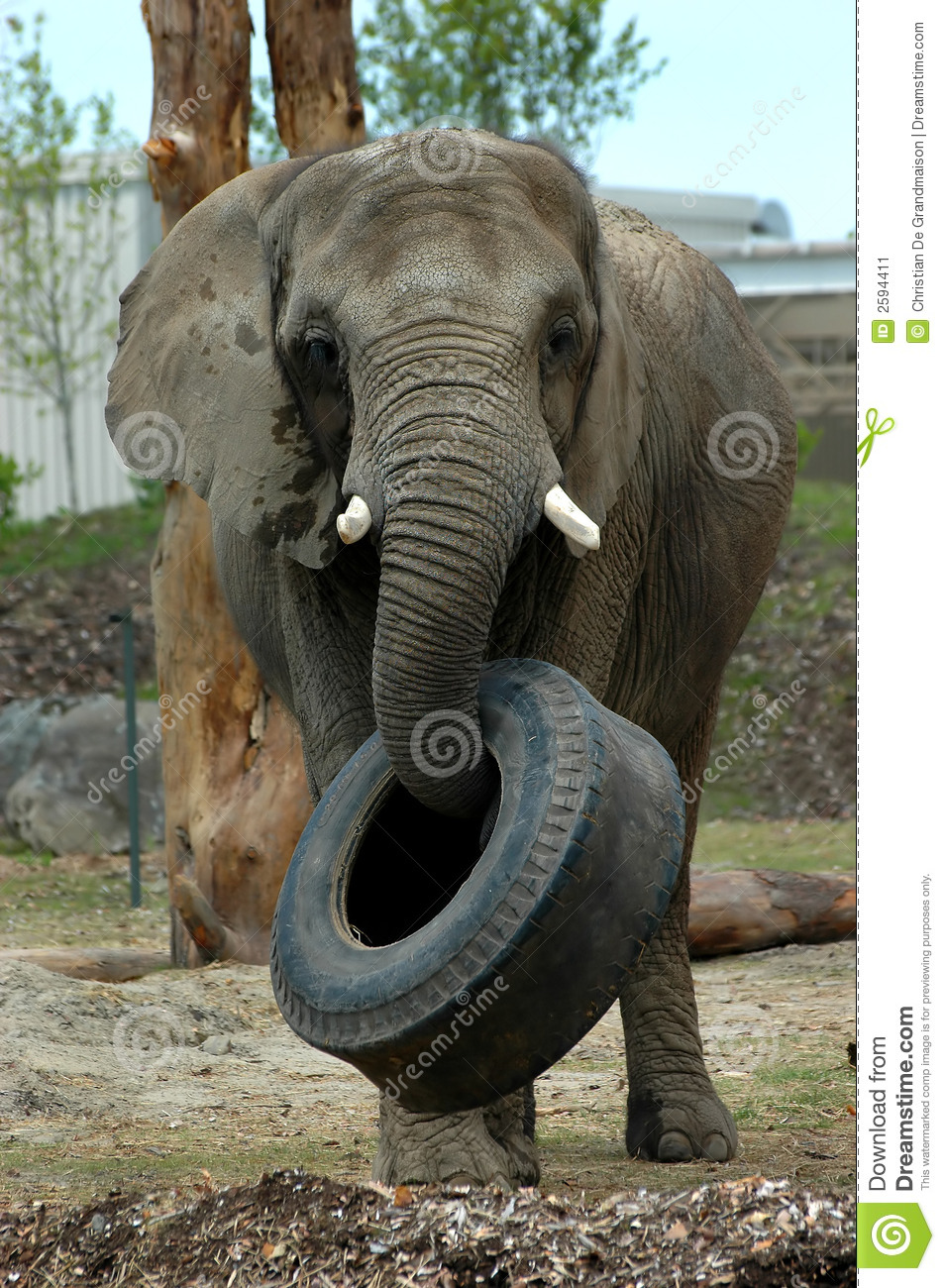 Elephant Picking Up Tire Stock Image - Image: 2594411