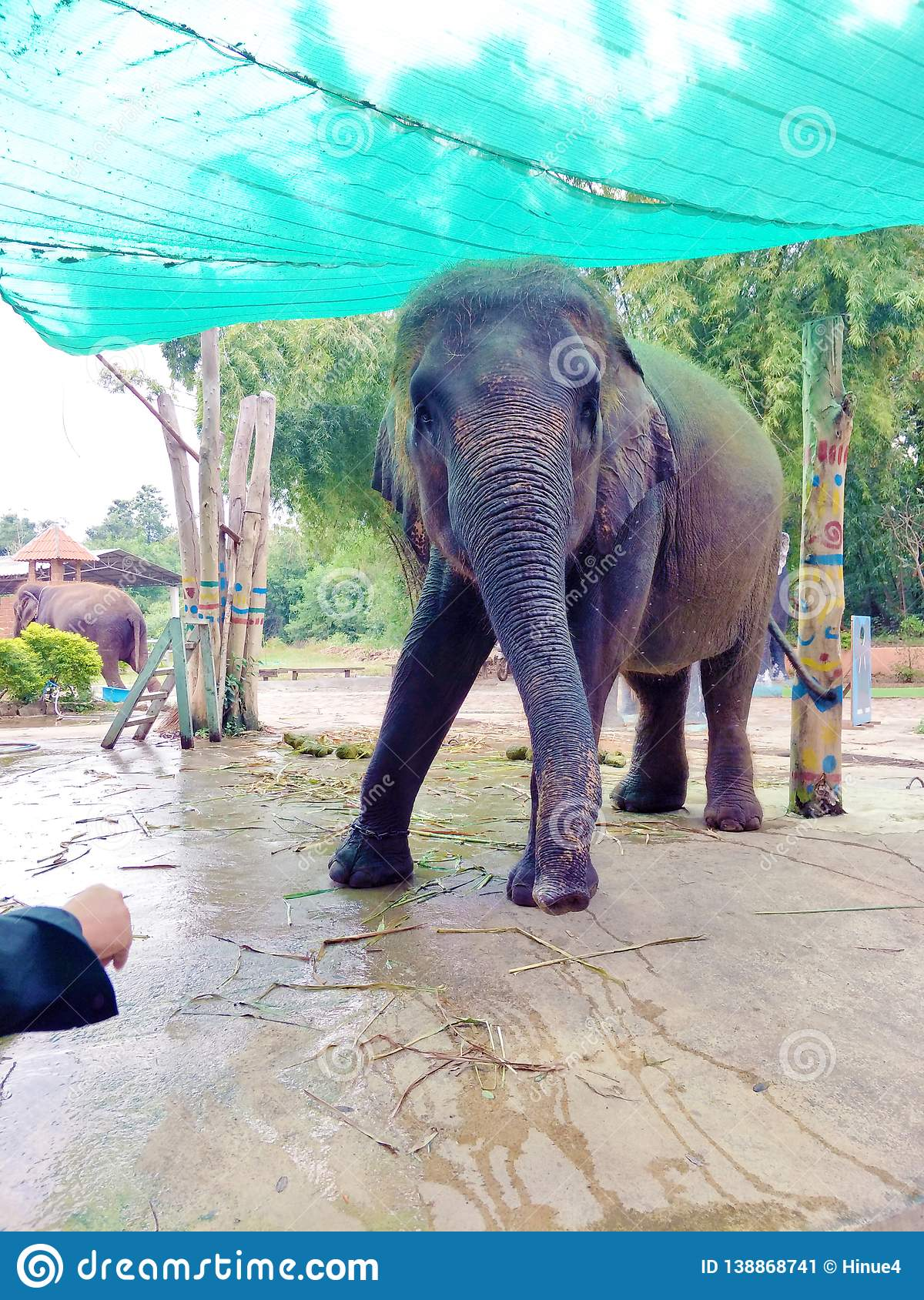An elephant playing with a trainer