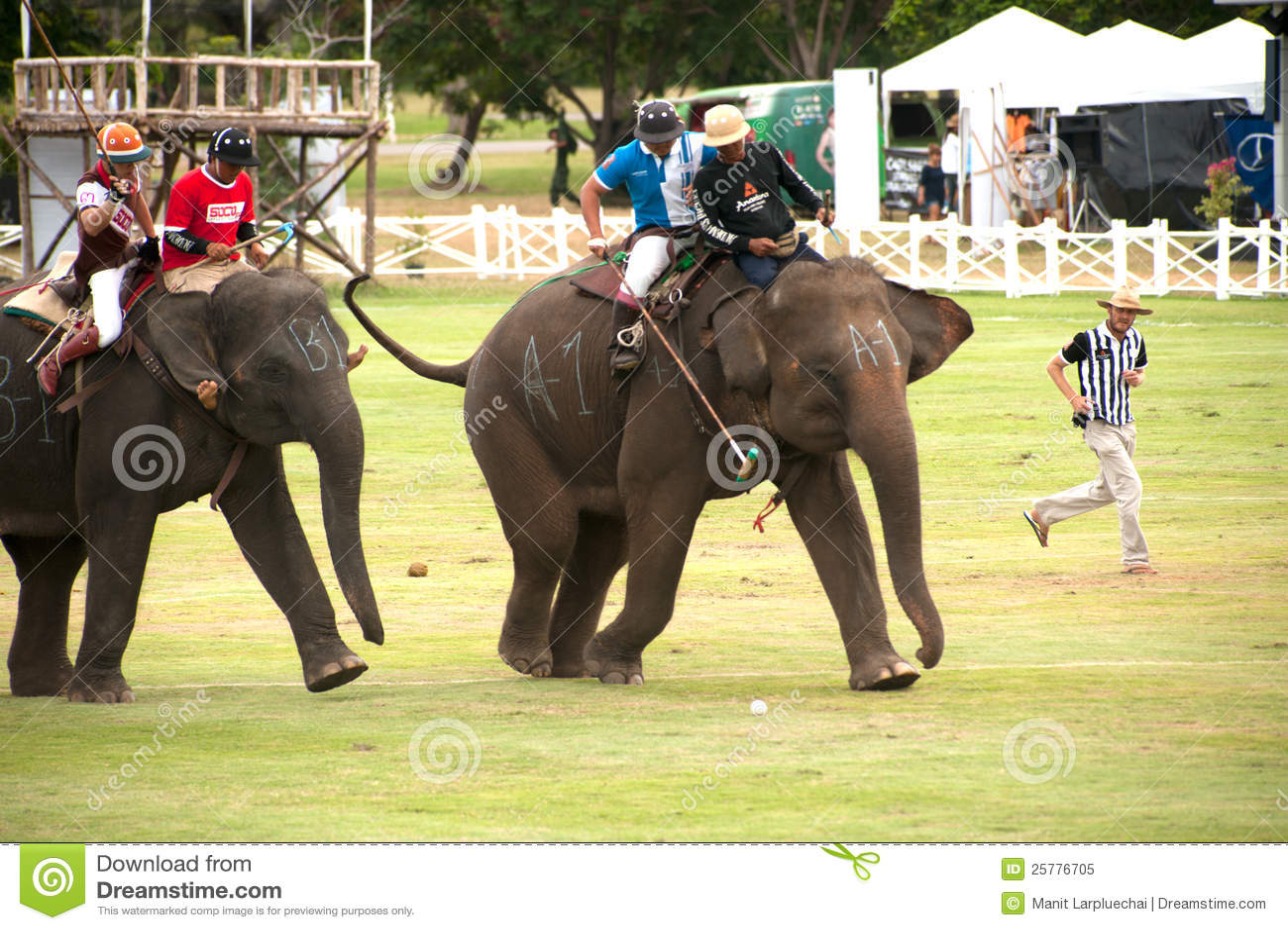 Elephant Polo Game. Editorial Image - Image: 25776705 Elephant Games