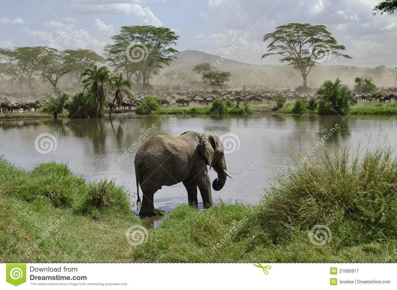 Elephant in river in Serengeti National Park