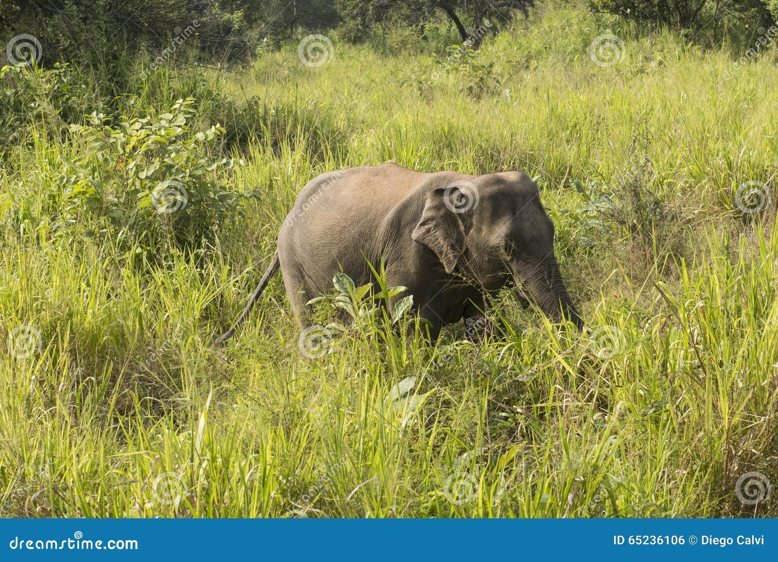 Elephant Safari in Polonnaruwa, Sri Lanka.