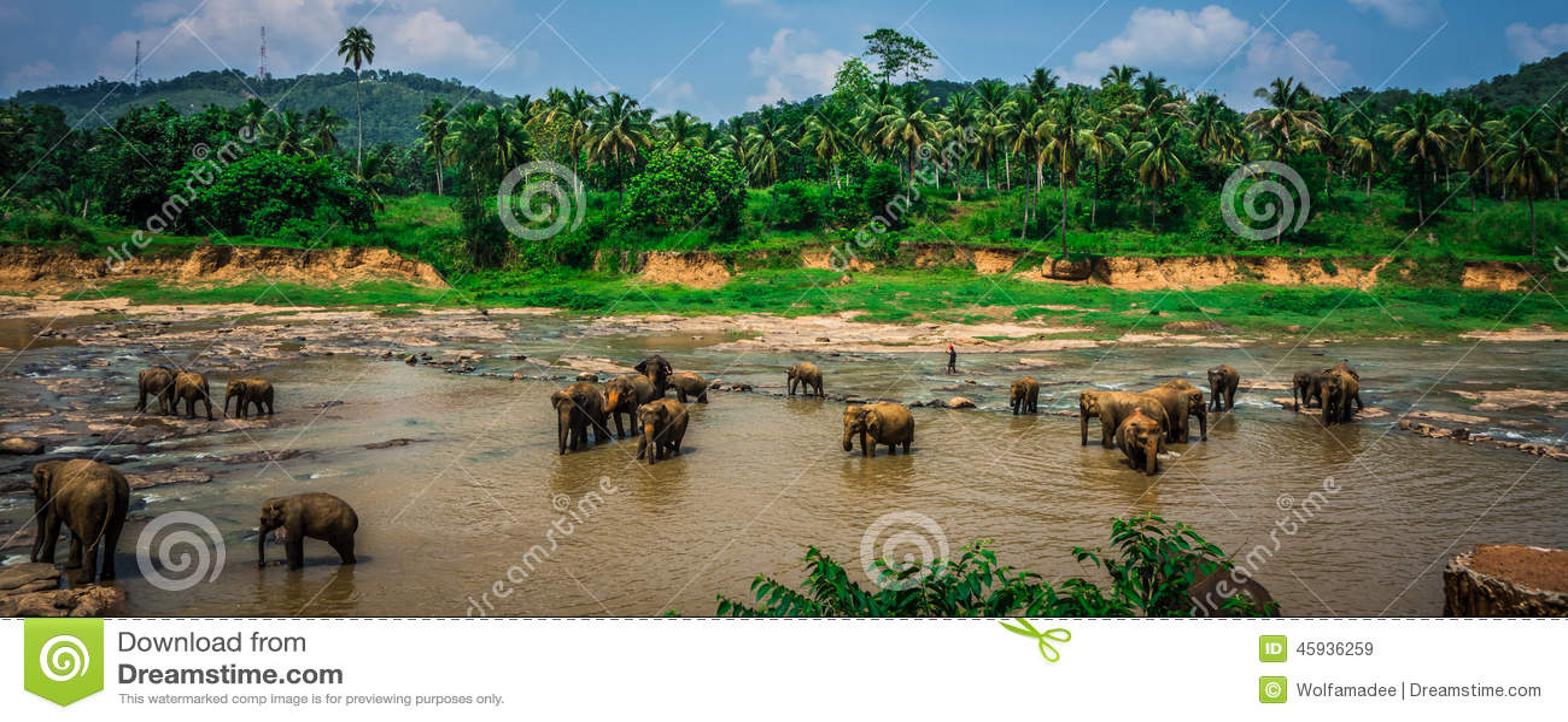 Elephant sanctuary in Sri Lanka