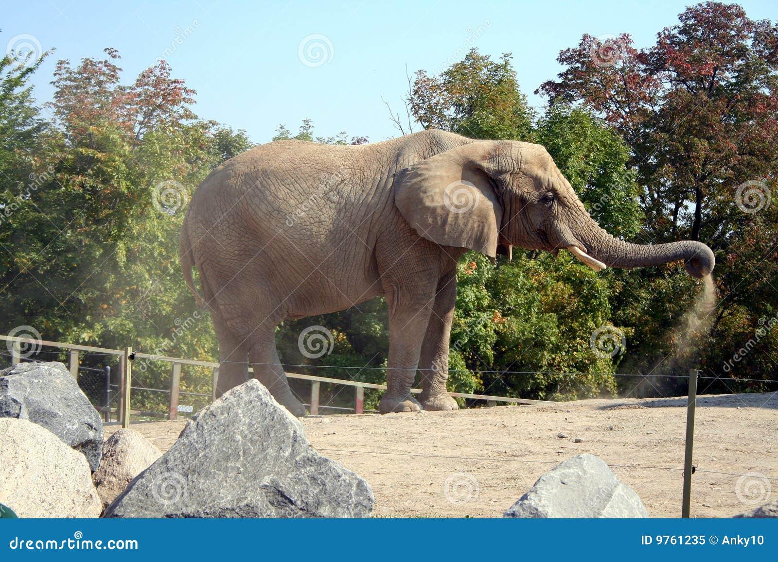 Elephant Shower