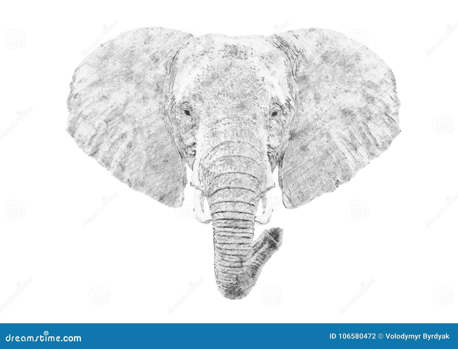 elefanten skizze