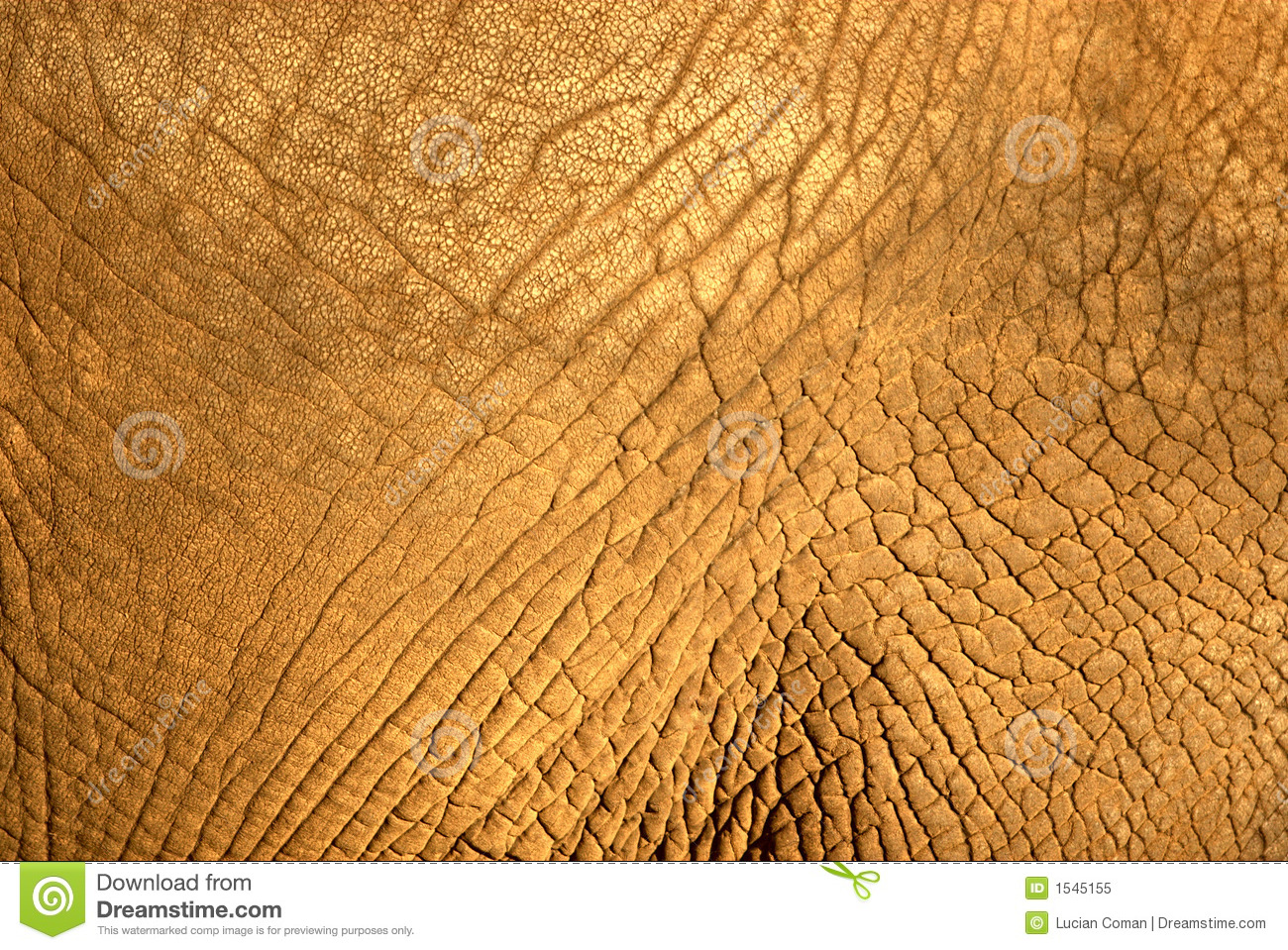 Elephant Skin Texture Royalty Free Stock Photo - Image ...