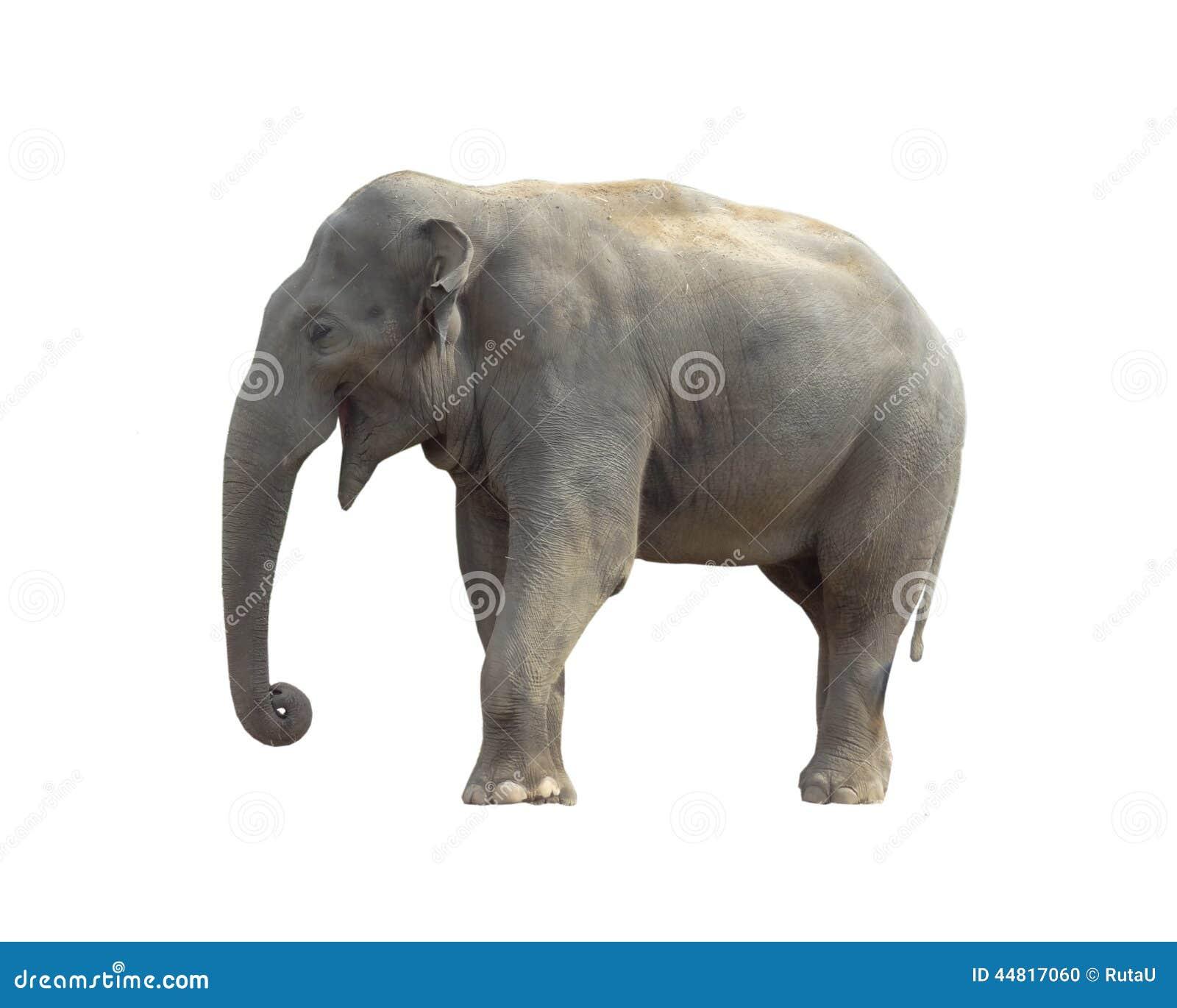 Elephant Stock Photo - Image: 44817060