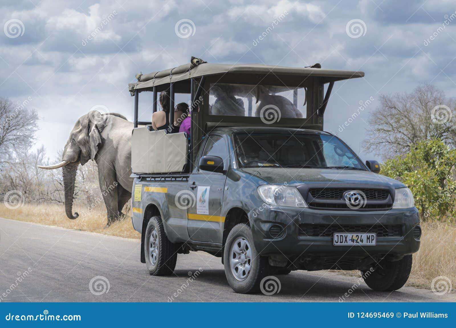 Elephant spotting Safari South Africa
