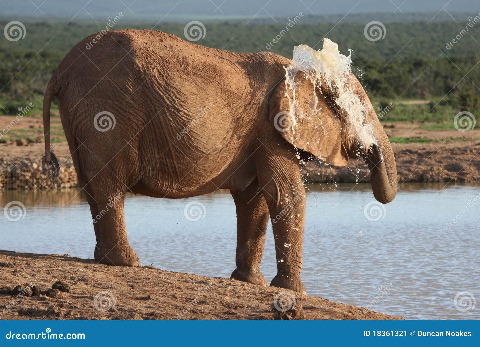 Elephant spraying water - photo#22