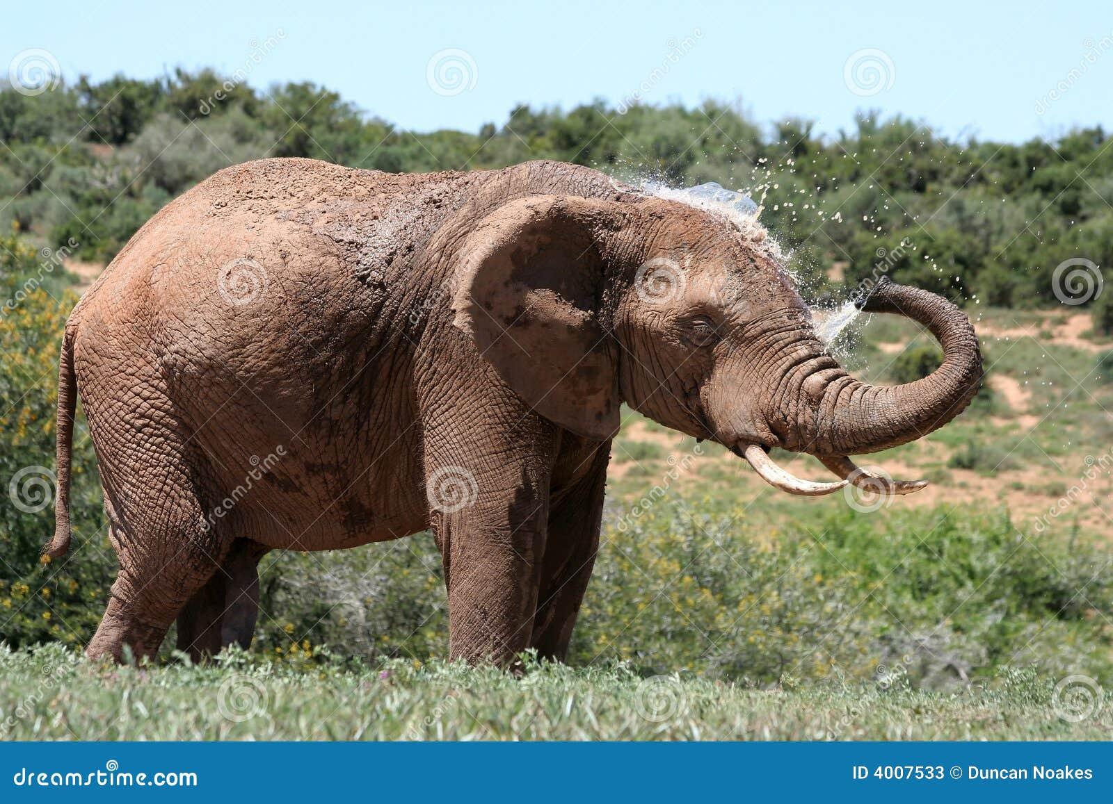 Elephant spraying water - photo#15