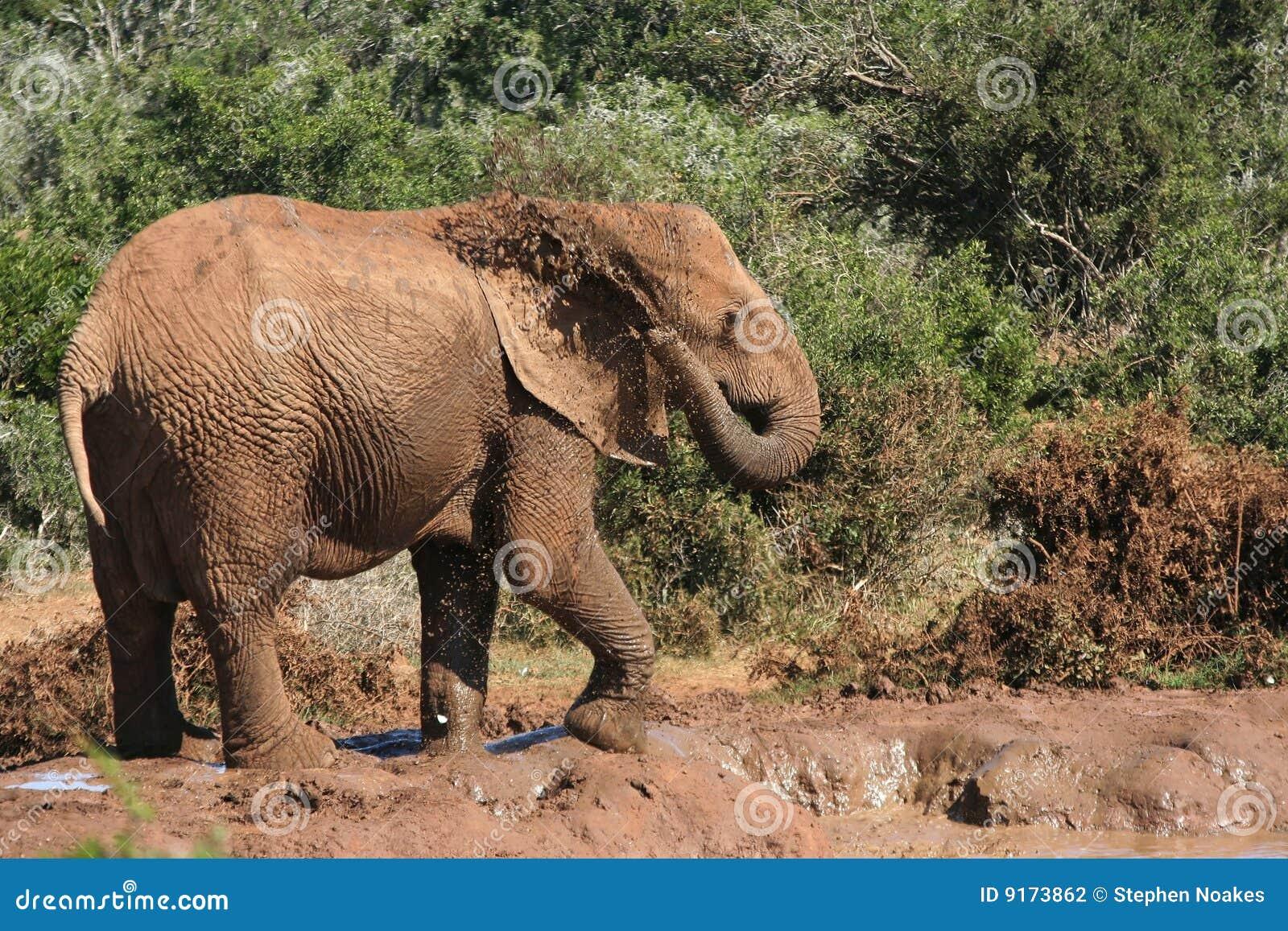 Elephant spraying water - photo#23