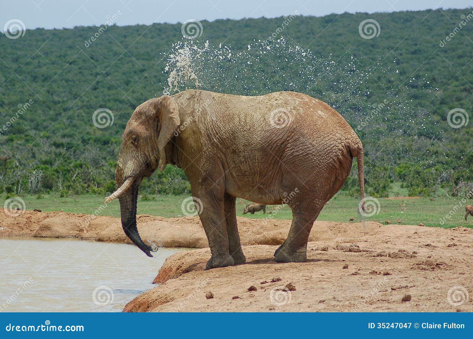Elephant spraying water - photo#21