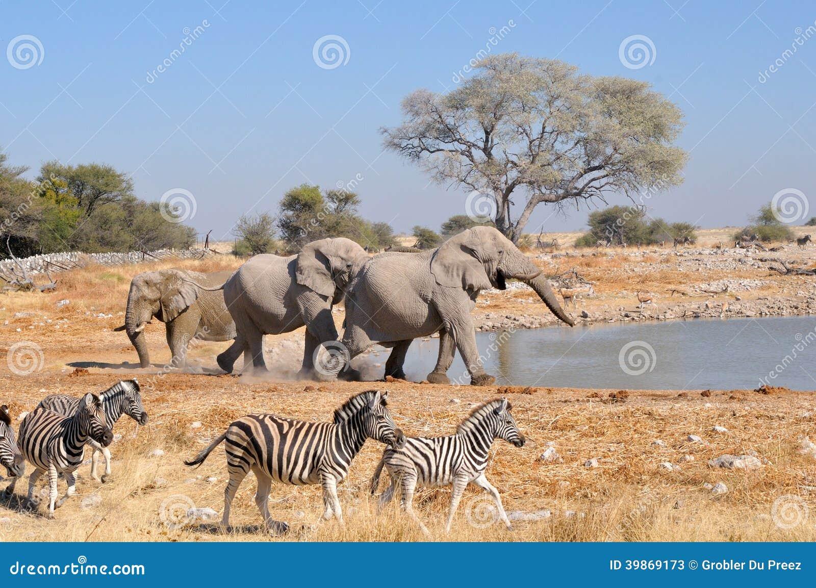Elephant squabble, Etosha National park, Namibia