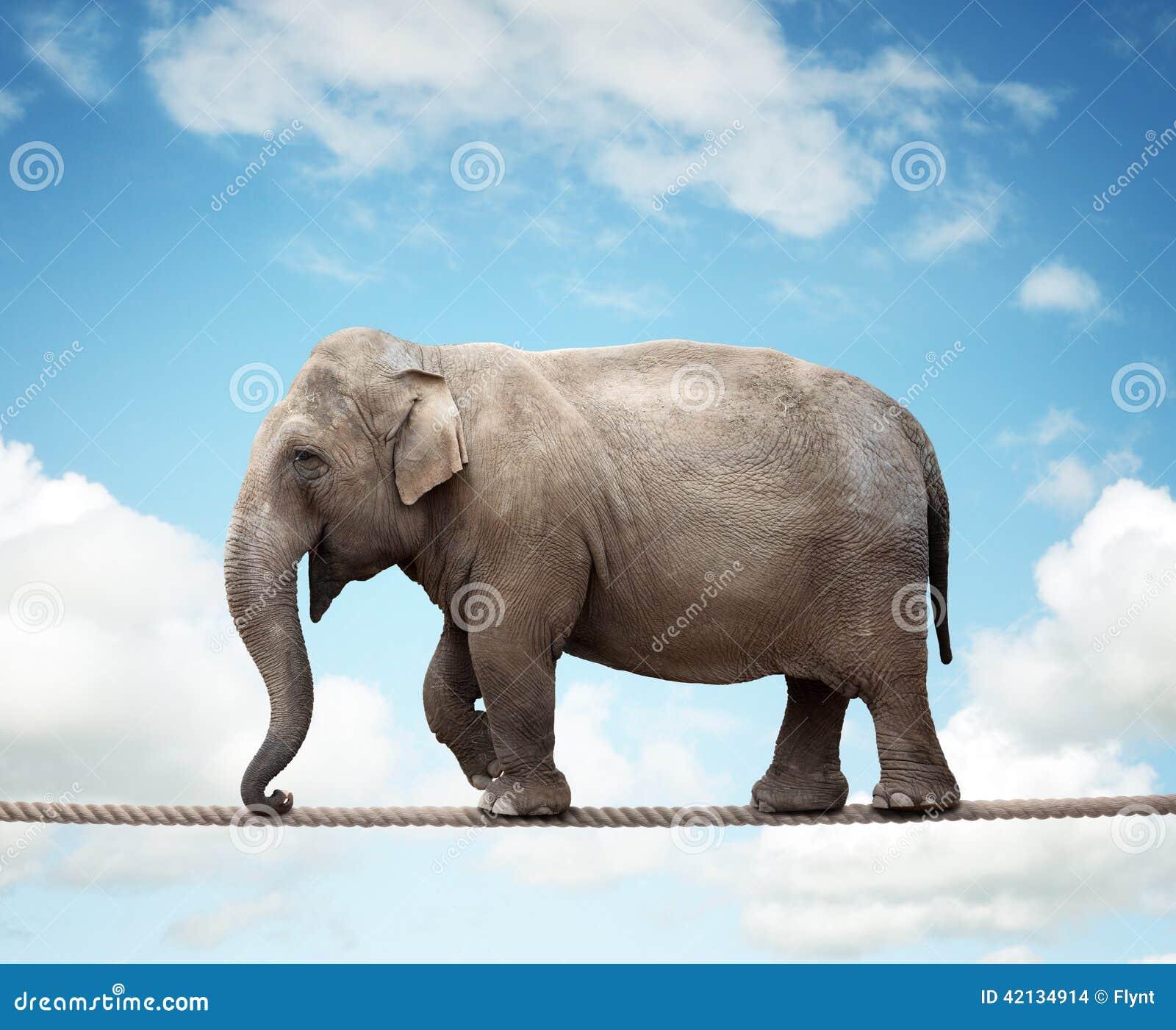 Elephant On A Tightrope Stock Photo Image 42134914