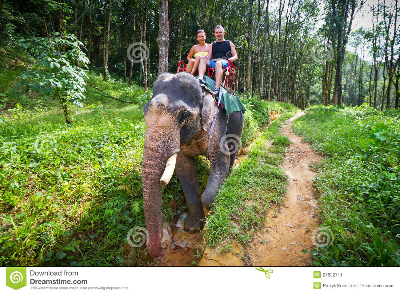 Elephant trekking in Khao Sok National Park