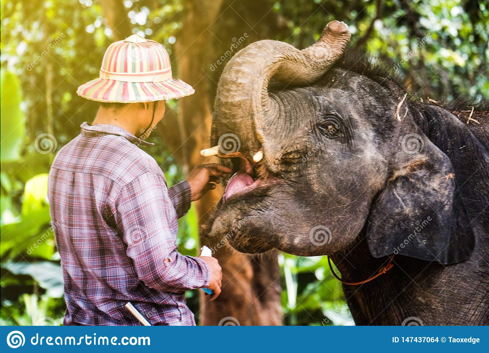 Elephant Village In Thailand
