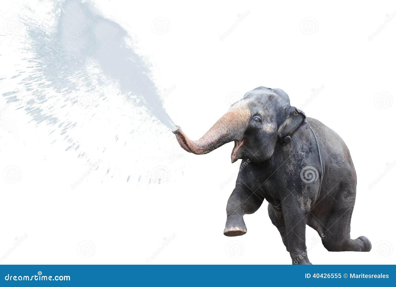Elephant spraying water - photo#18