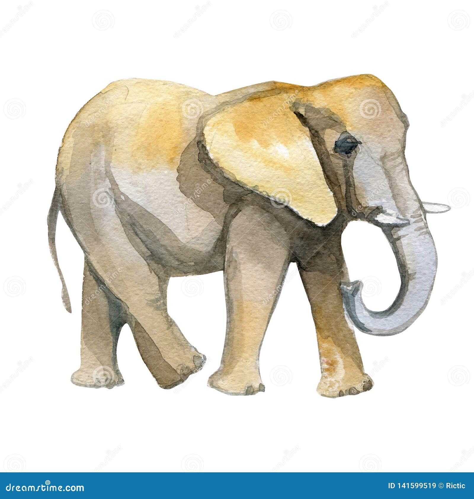 Elephant yellow watercolor realistic illustration