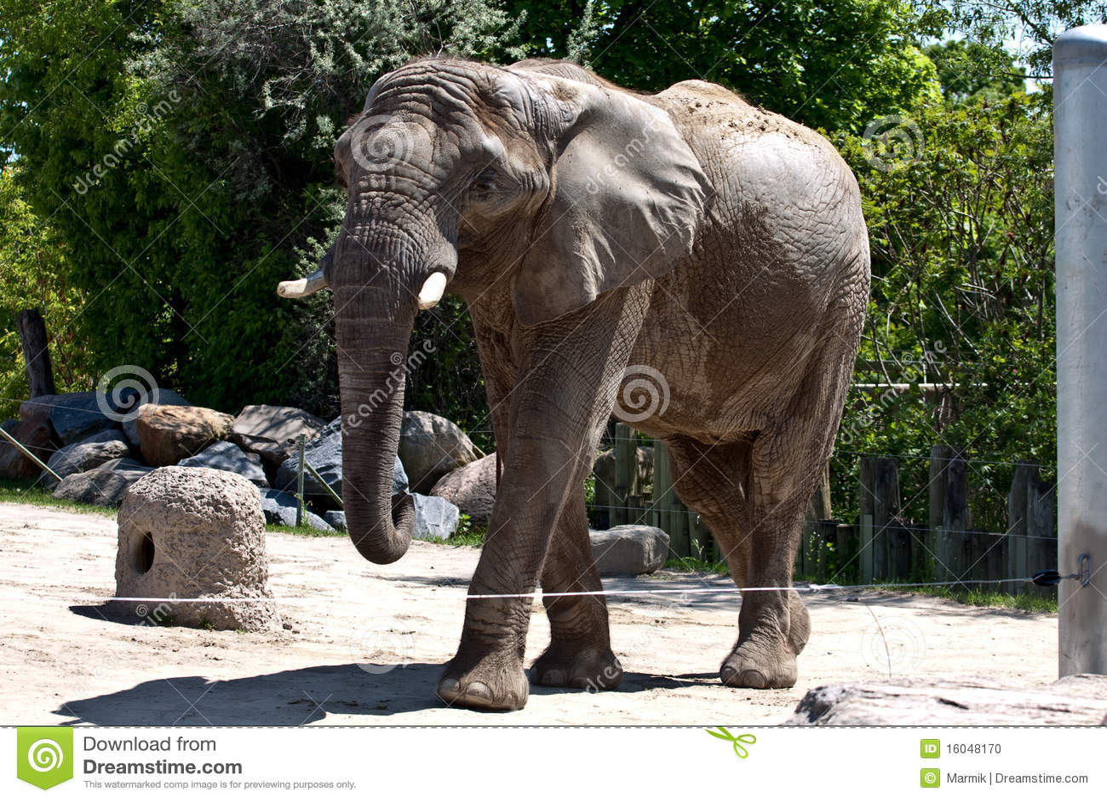Elephant In Zoo Stock ...