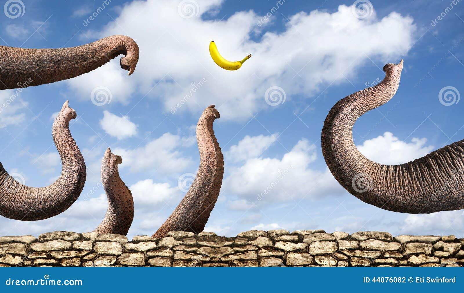 Elephants catching a banana