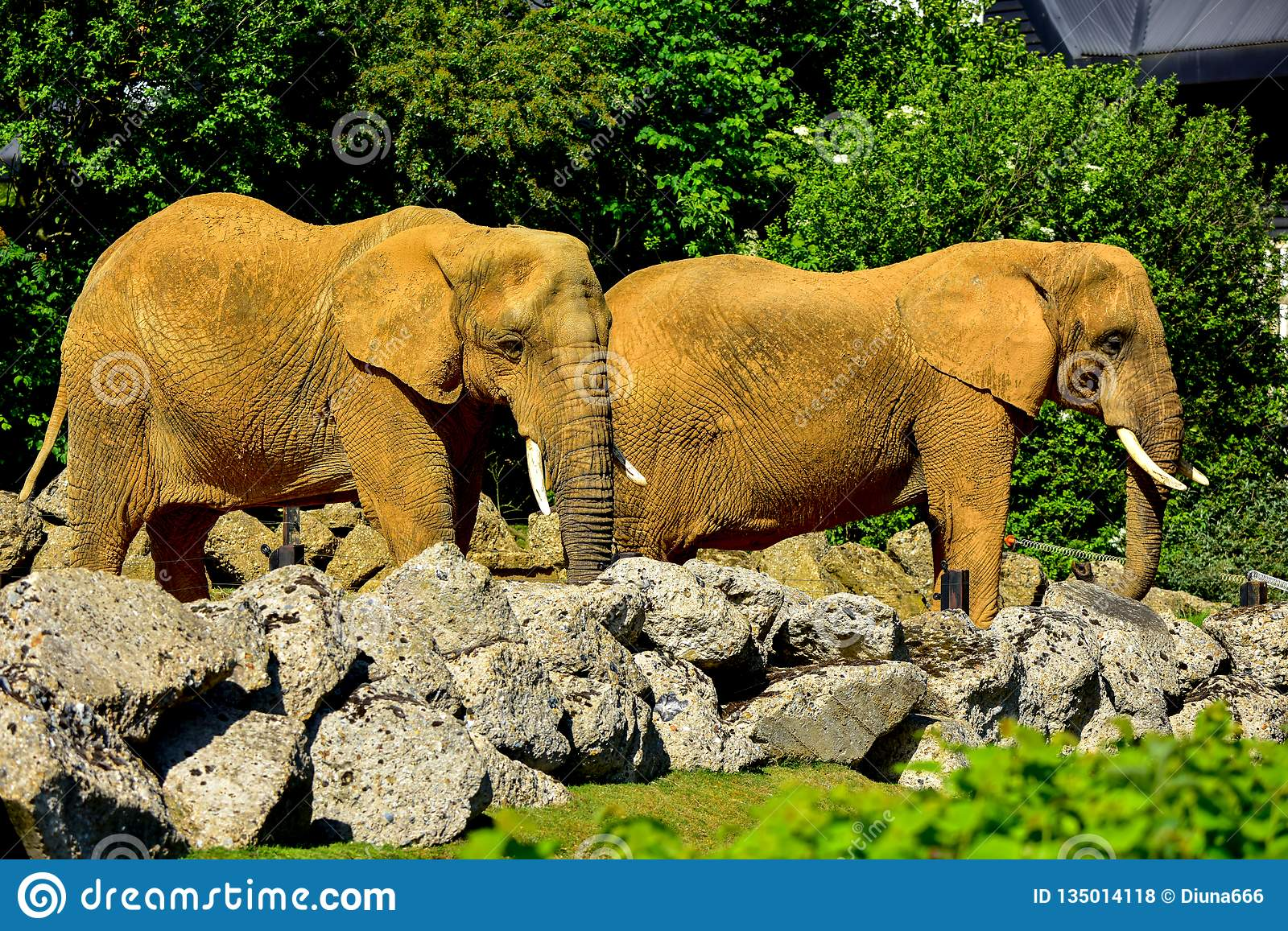 Elephants Before Feeding In A Zoo Stock Photo - Image of