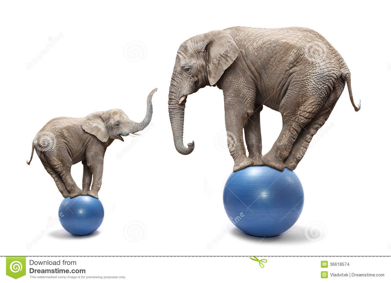 African elephant female and her baby elephant balancing on a blue ...