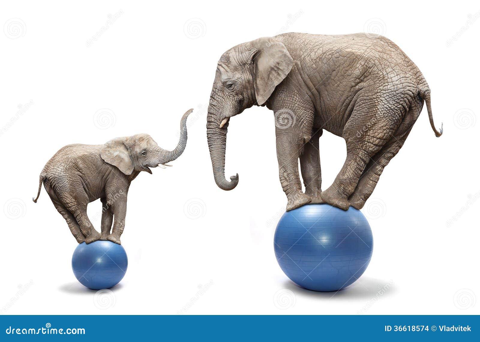 Elephants have a fun.