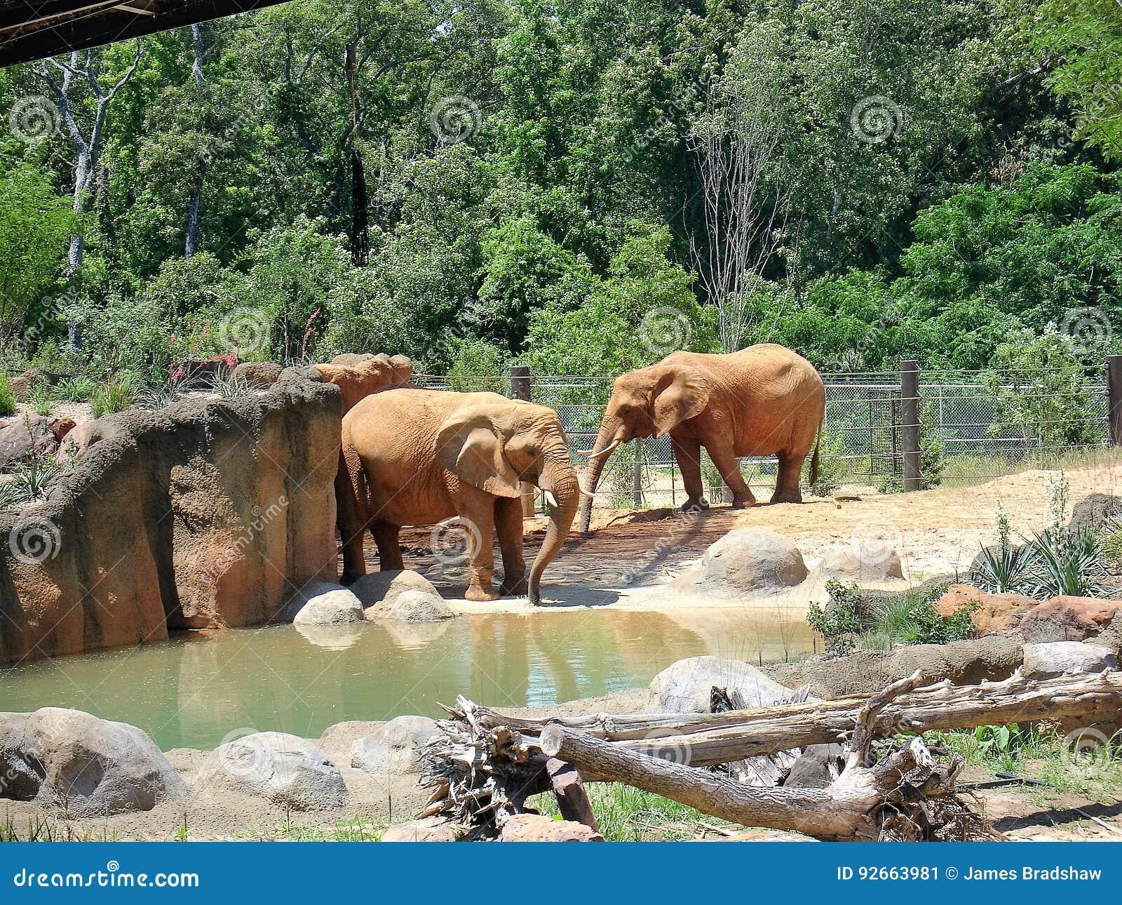 Elephants at zoo