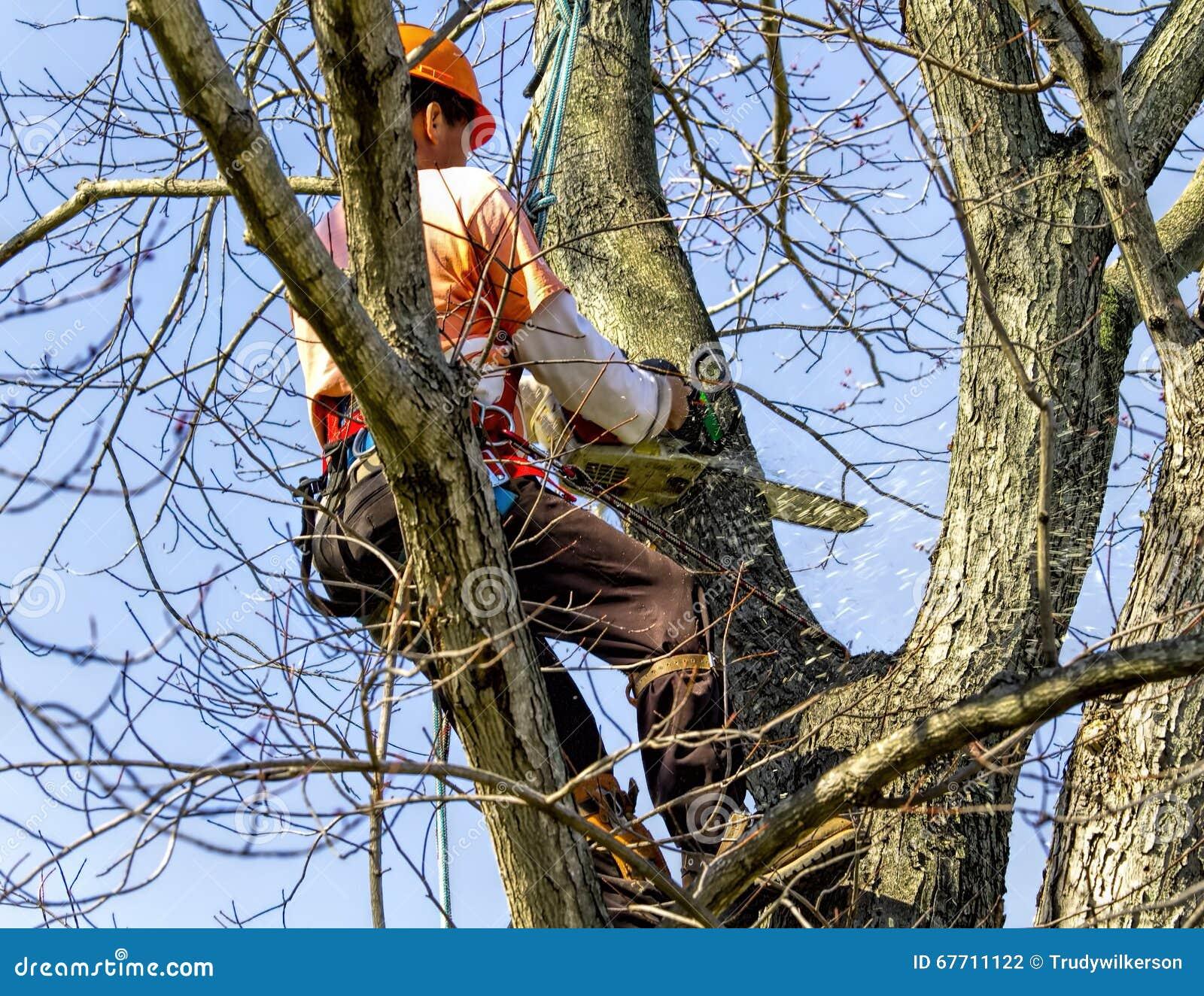 Elevação profissional na árvore que remove os membros
