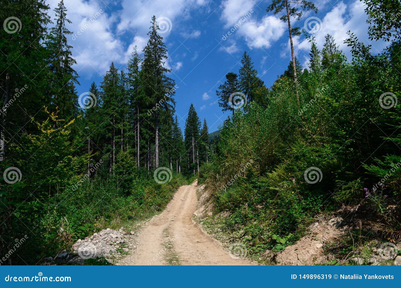Eleva??o da estrada de terra nas montanhas entre os pinheiros altos contra o c?u azul
