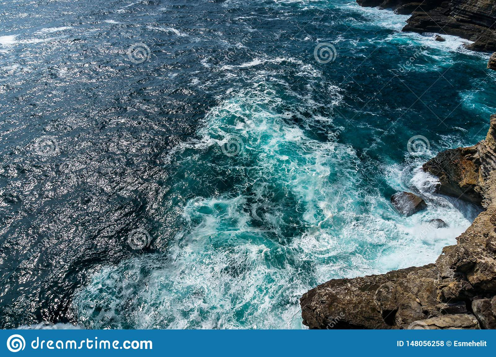 Hd Wallpaper Seagulls Flying Over Beach Action Animals Blue Sky Daylight Wallpaper Flare