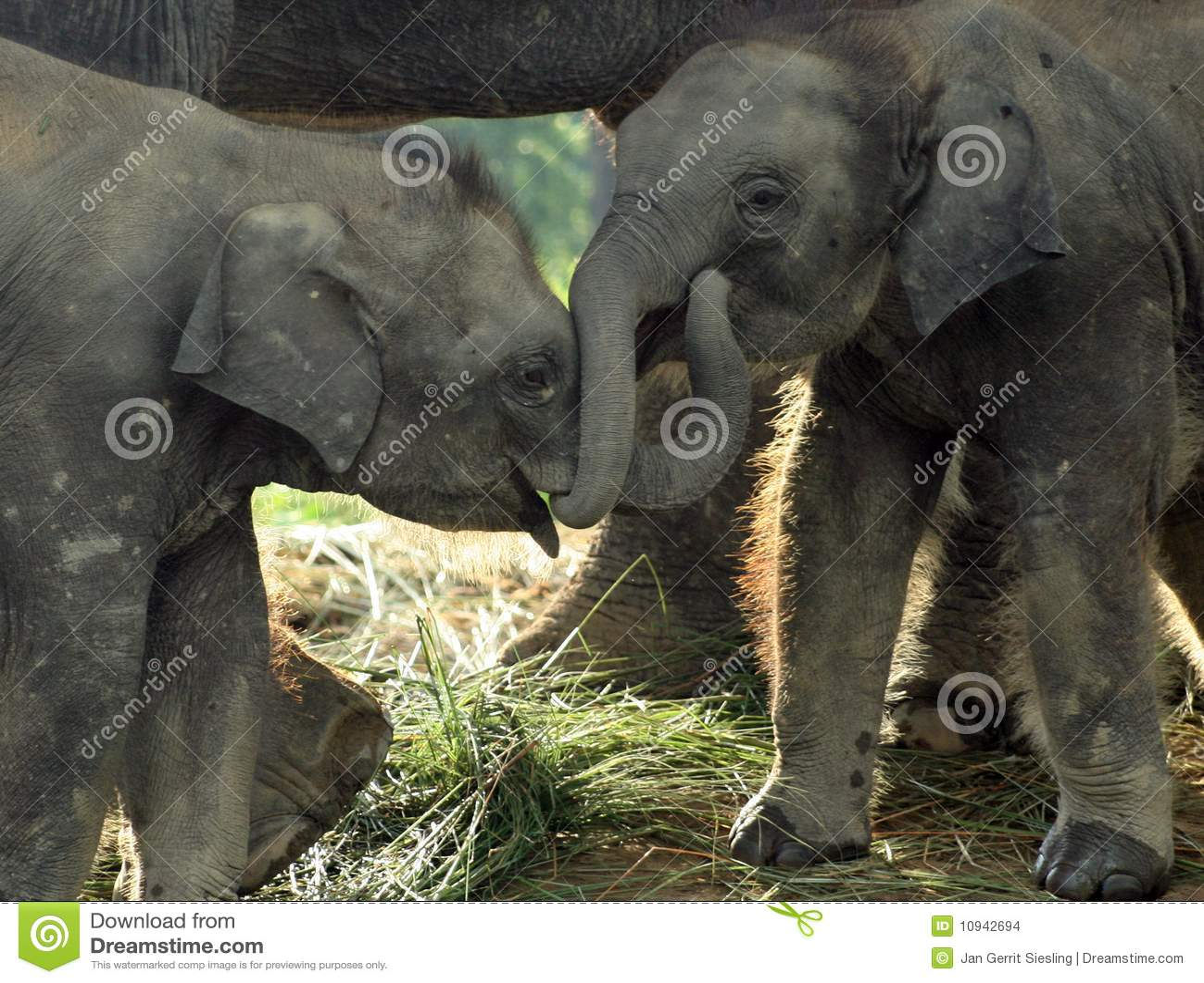 Eliphants 2 младенца