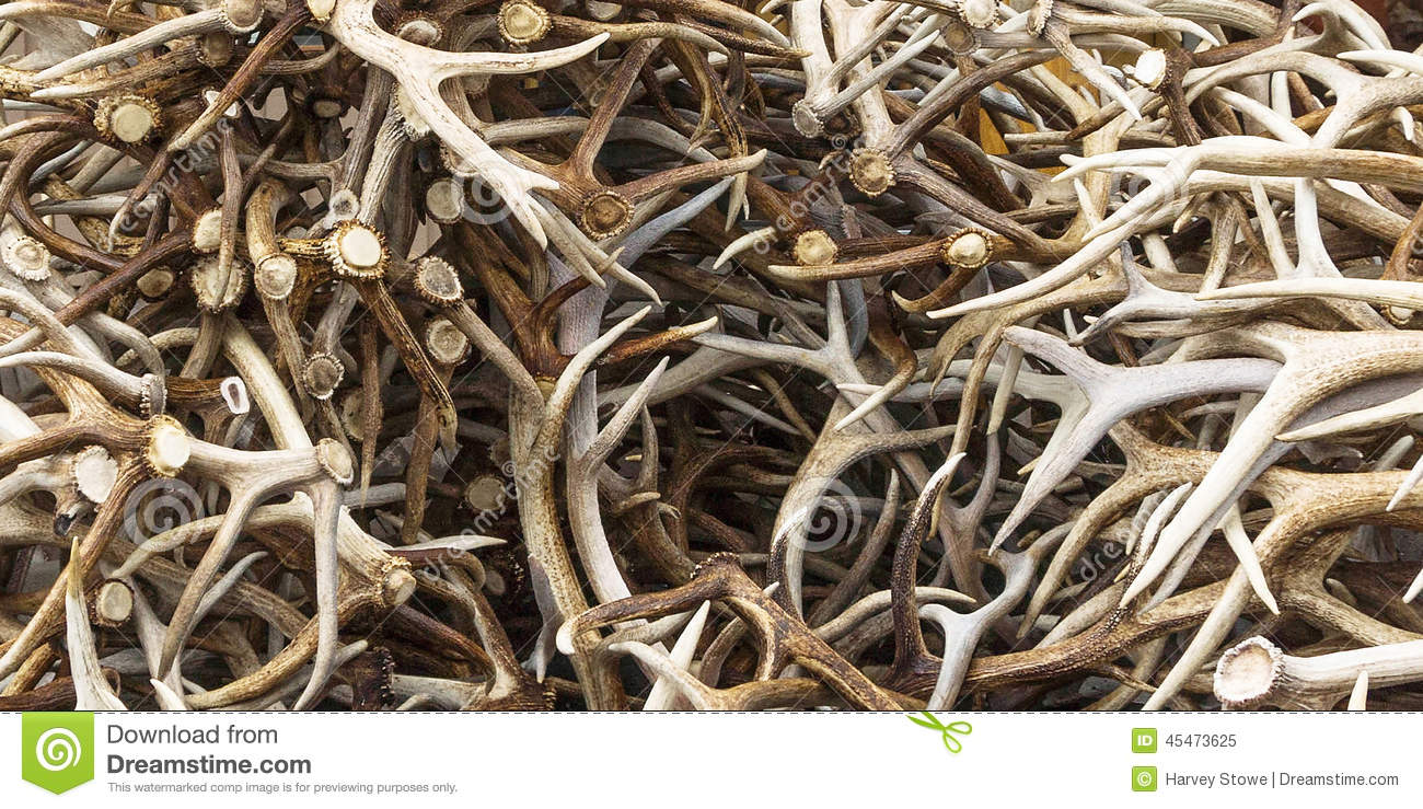 Elk Antler S Stock Photo Image 45473625