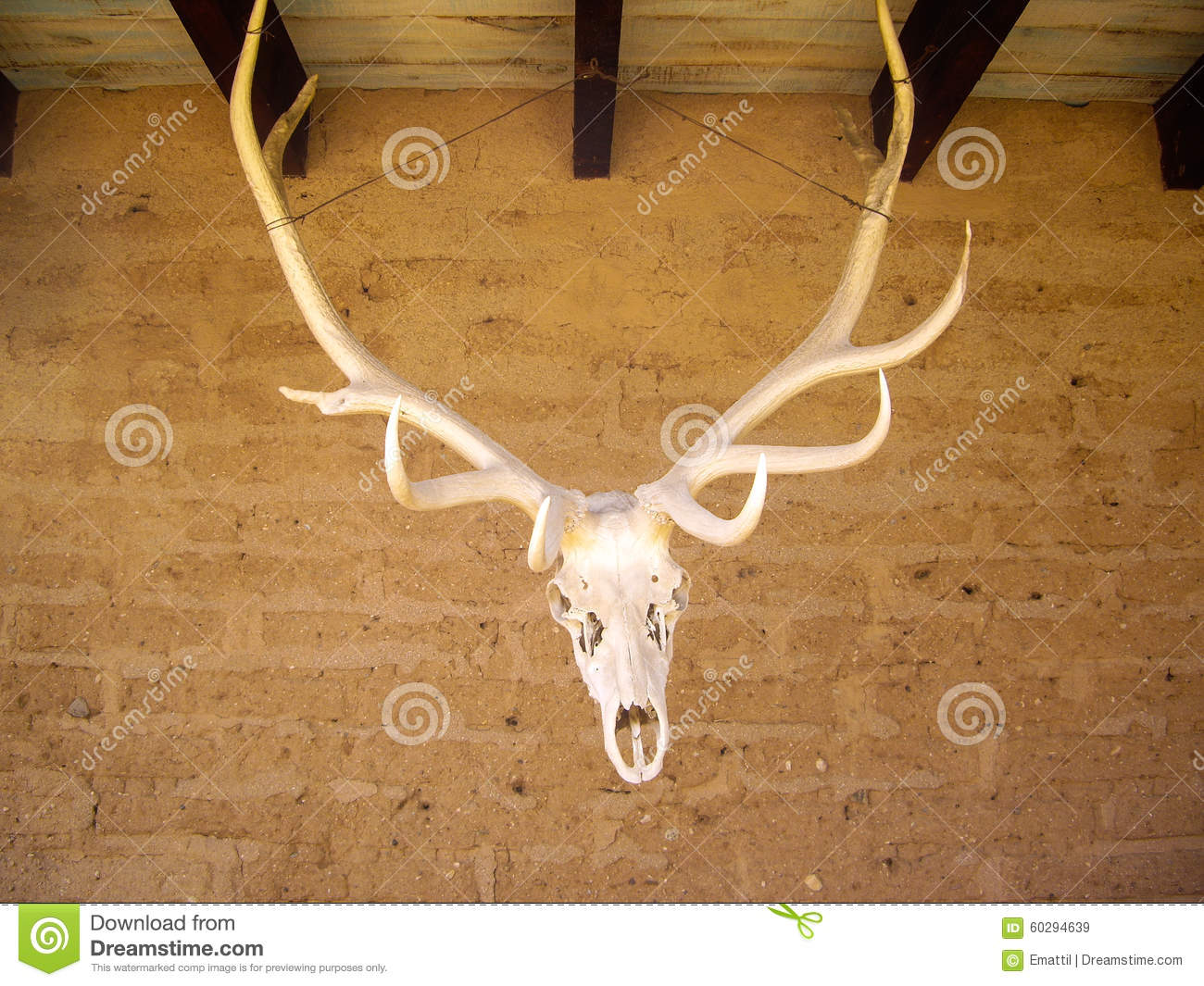 Elk Head And Antlers Stock Photo Image 60294639