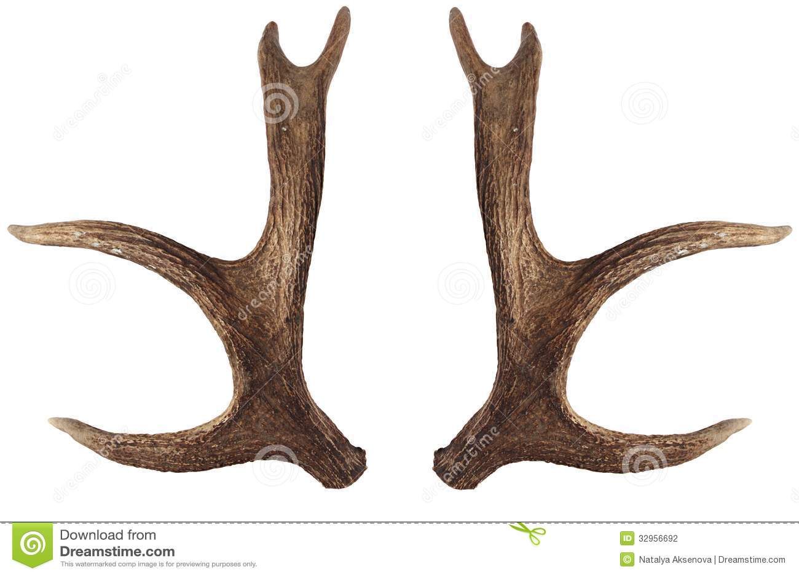 Cuernos De Diablo Png: Elk Horns Isolated On A White Background. Elk Antlers Four