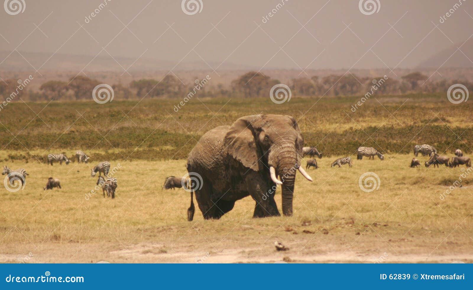 Elli 3.04 van Amboseli