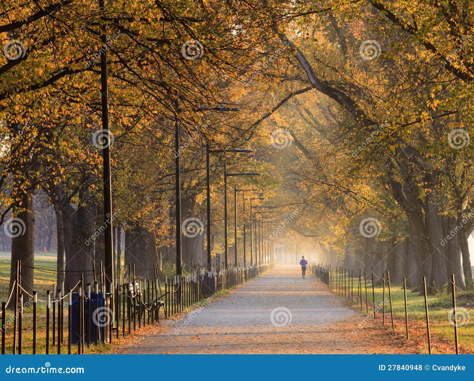Elm Tree Walk Washington DC