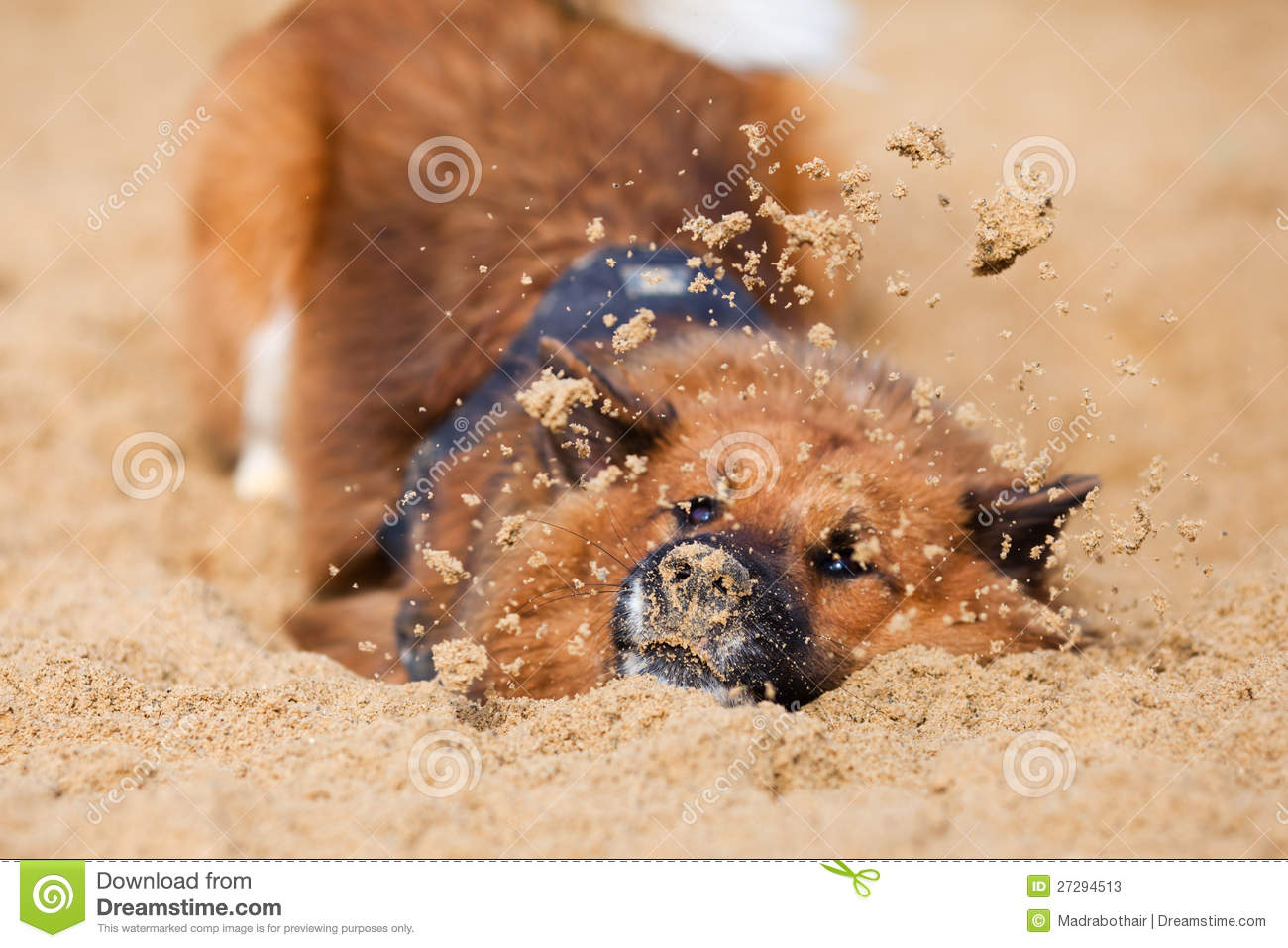 elo hund der mit dem sand spielt stockfotos bild 27294513. Black Bedroom Furniture Sets. Home Design Ideas