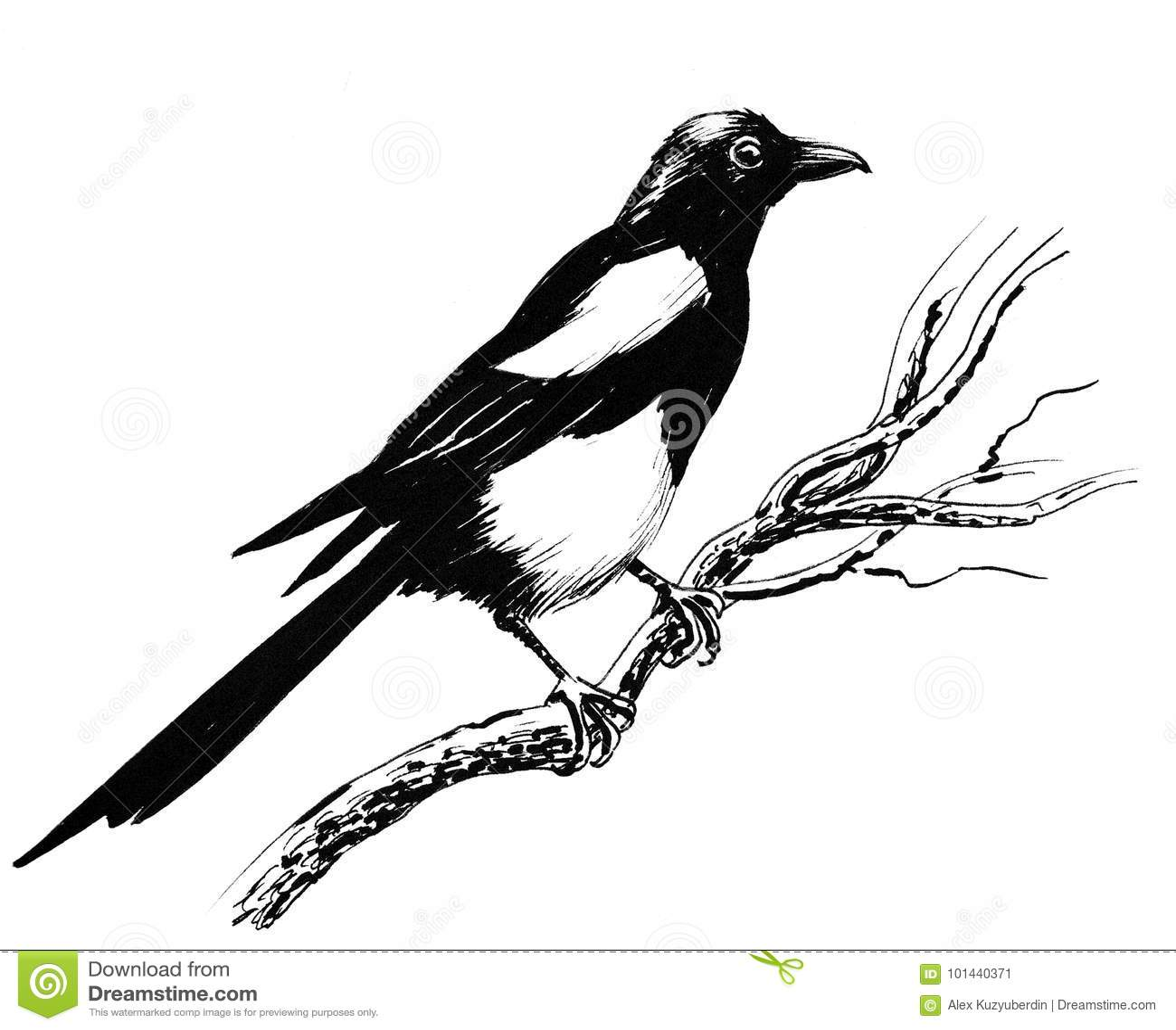 elstervogel stock abbildung illustration von vogel