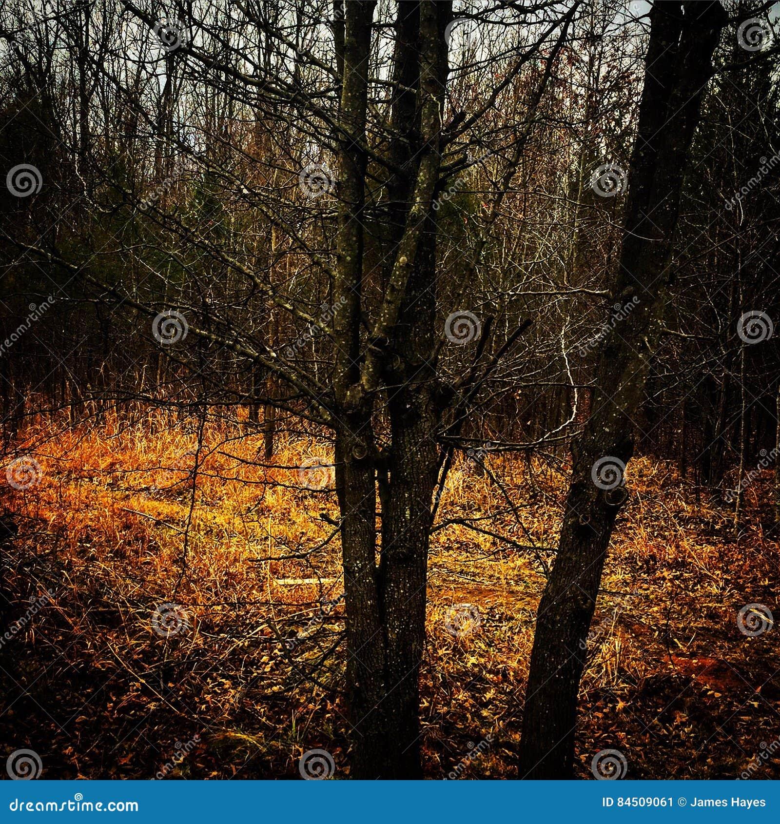 Elvish Forrest