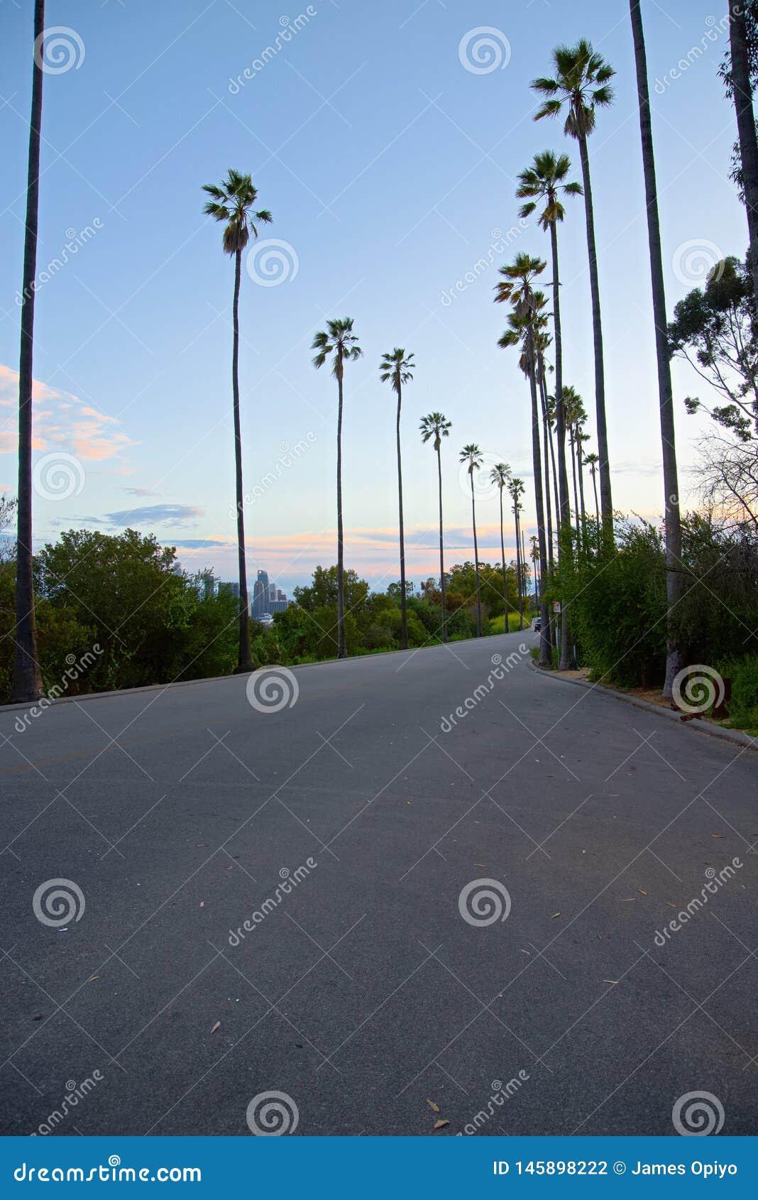 Elyseiska palmträd - parkera Kalifornien