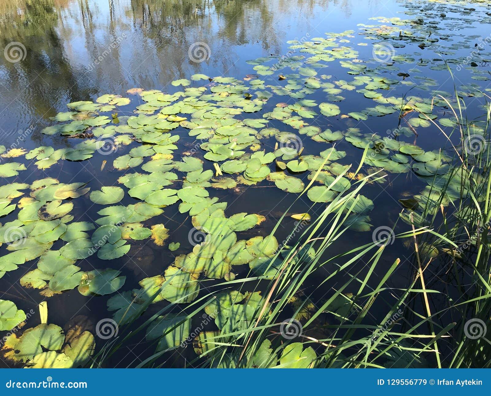 EM OUTUBRO DE 2018, a floresta de água doce em segundo a mais grande do pântano de Turquia: Acarlar em Sakarya, Turquia