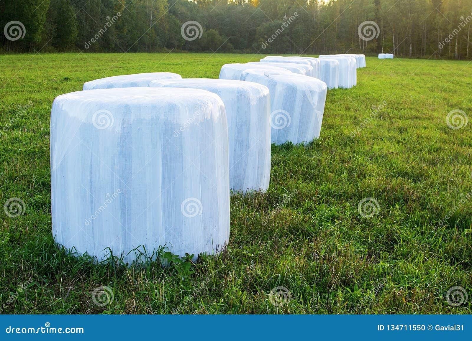 Embalado em um filme branco do polímero da inclinação e na grama fraca do feno para rebanhos animais de alimentação no inverno