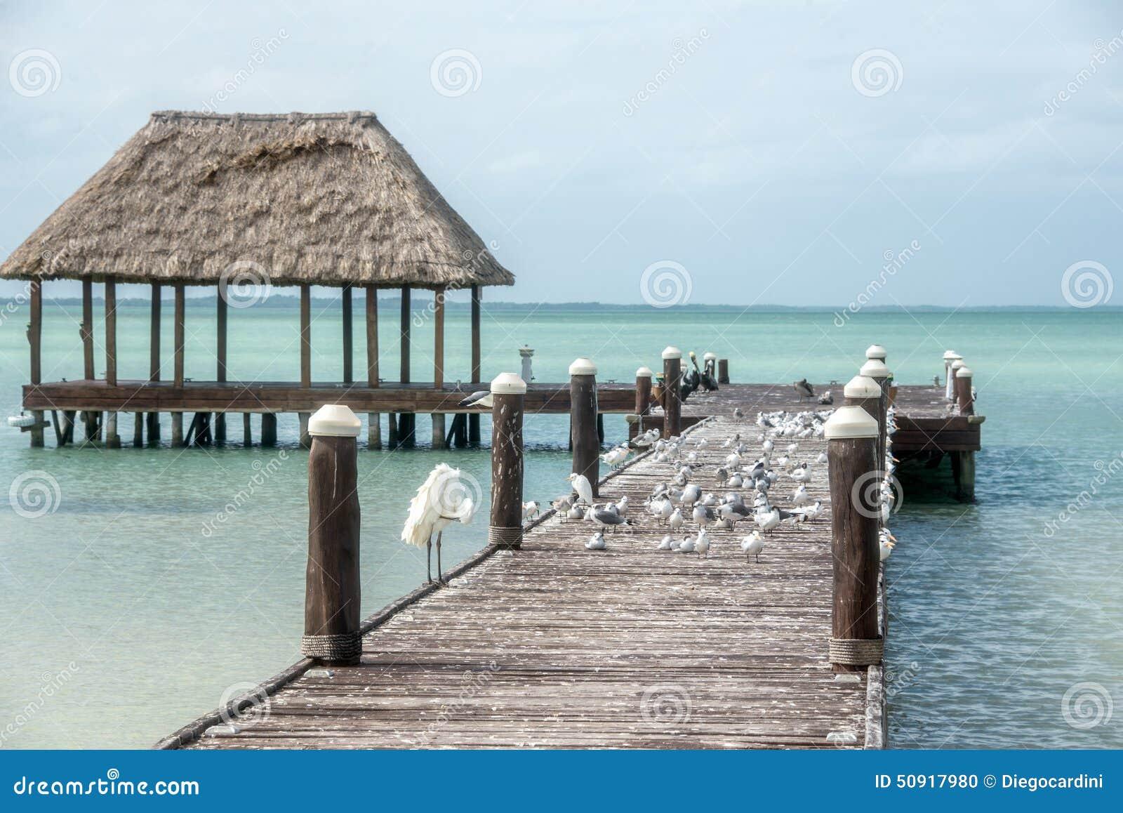 Embarcadero de madera y de la choza de Palapa con los segals y los pájaros Holbox, Tropica