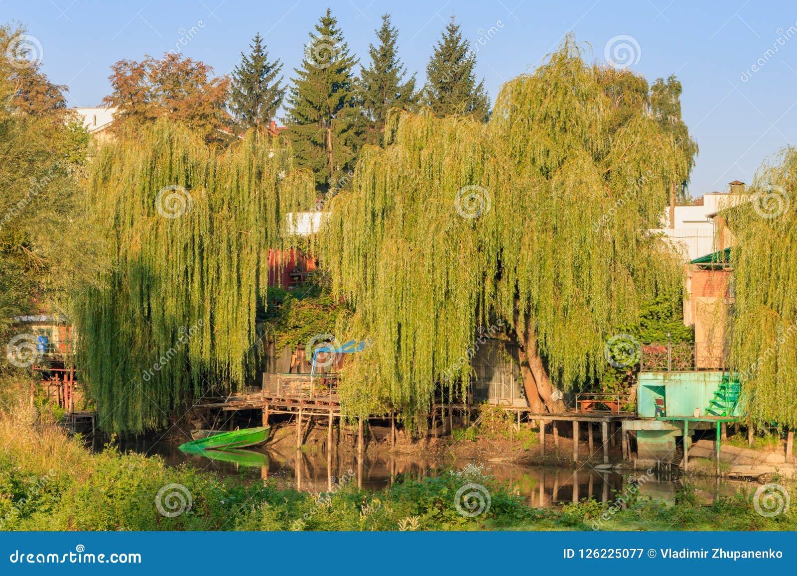 Embarcaderos de madera viejos en el banco escarpado de un pequeño río demasiado grande para su edad con los sauces viejos altos p