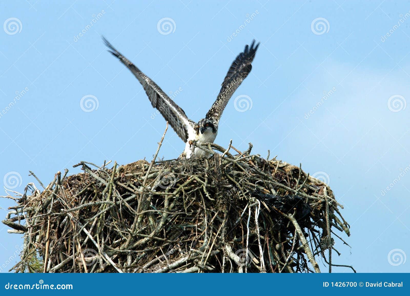 Emboîtement protecteur d Osprey