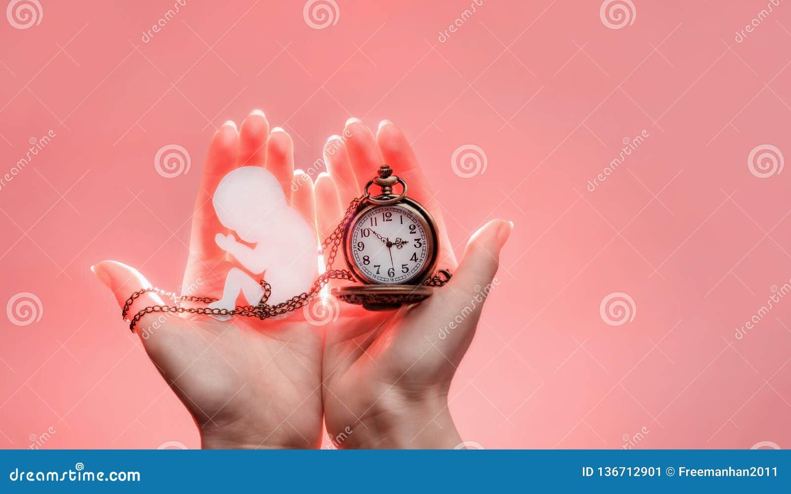 Embryosilhouet van document met ketting en klok in vrouwenhanden met licht Handen op de linkerkant Roze achtergrond met exemplaar