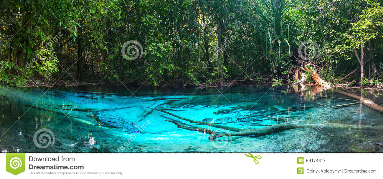 Pond in jungle with clear blue water royalty free stock for Blue water parts piscine