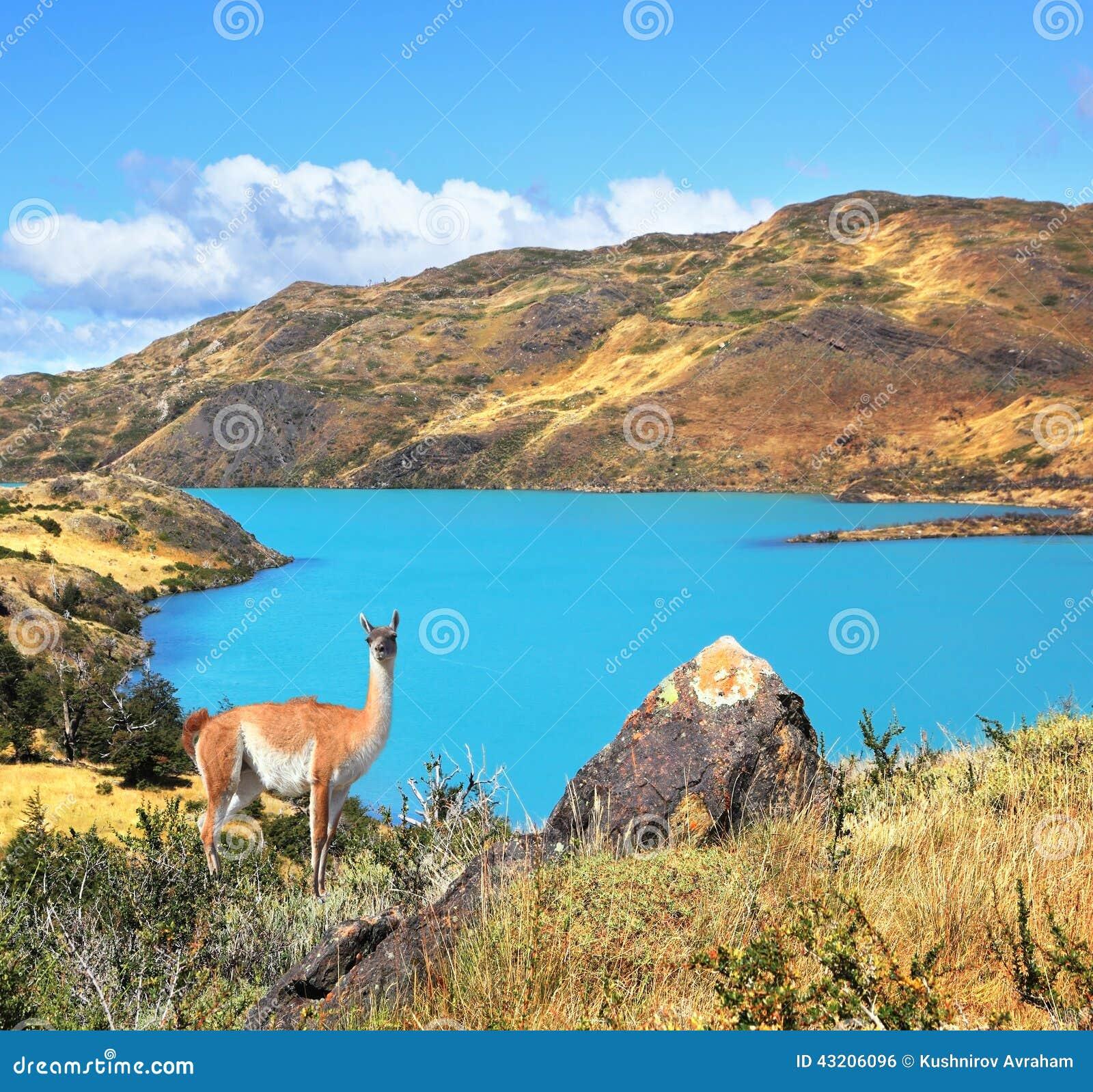 Download Emerald Lake Pehoe arkivfoto. Bild av nationellt, lopp - 43206096