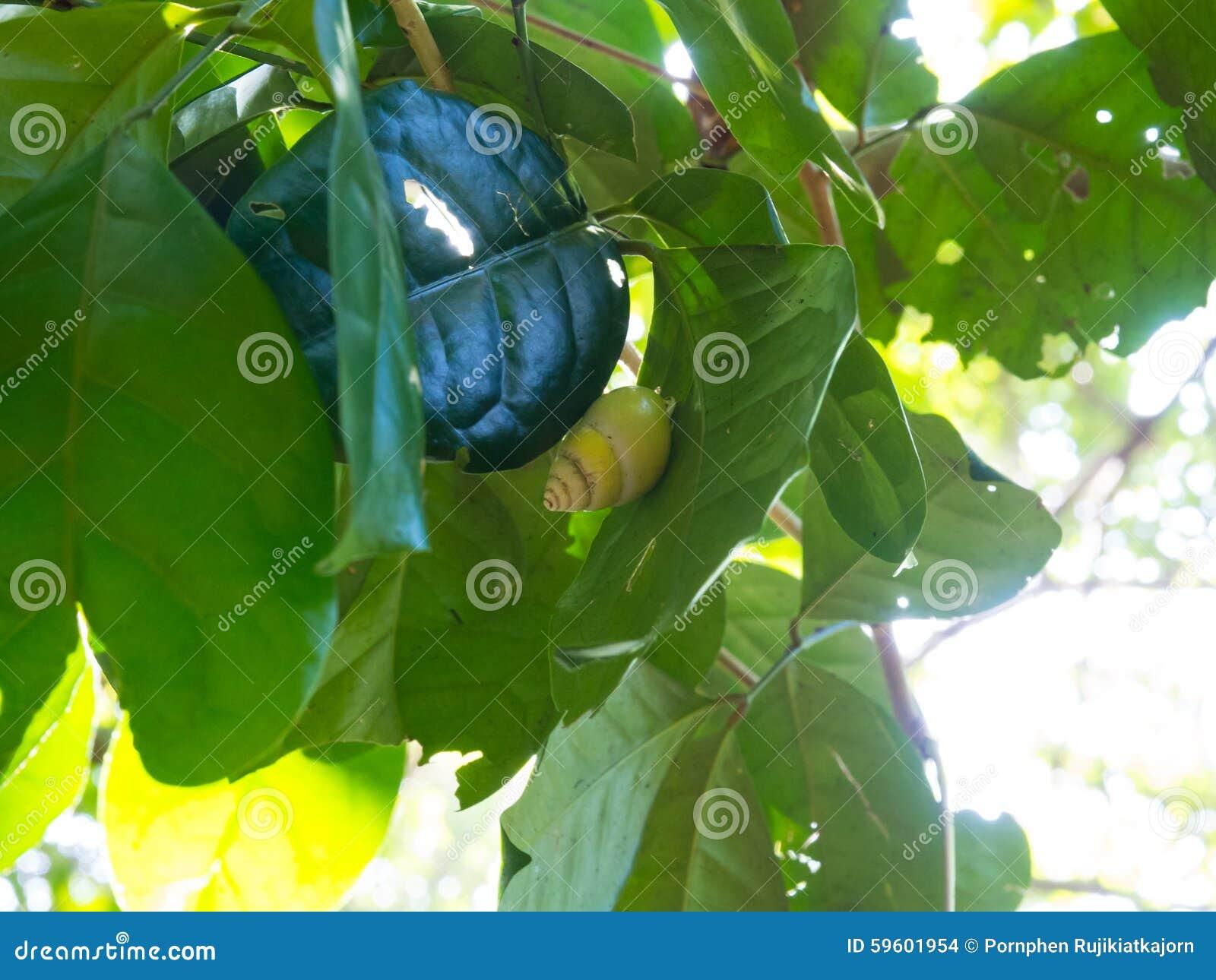green leaf serum