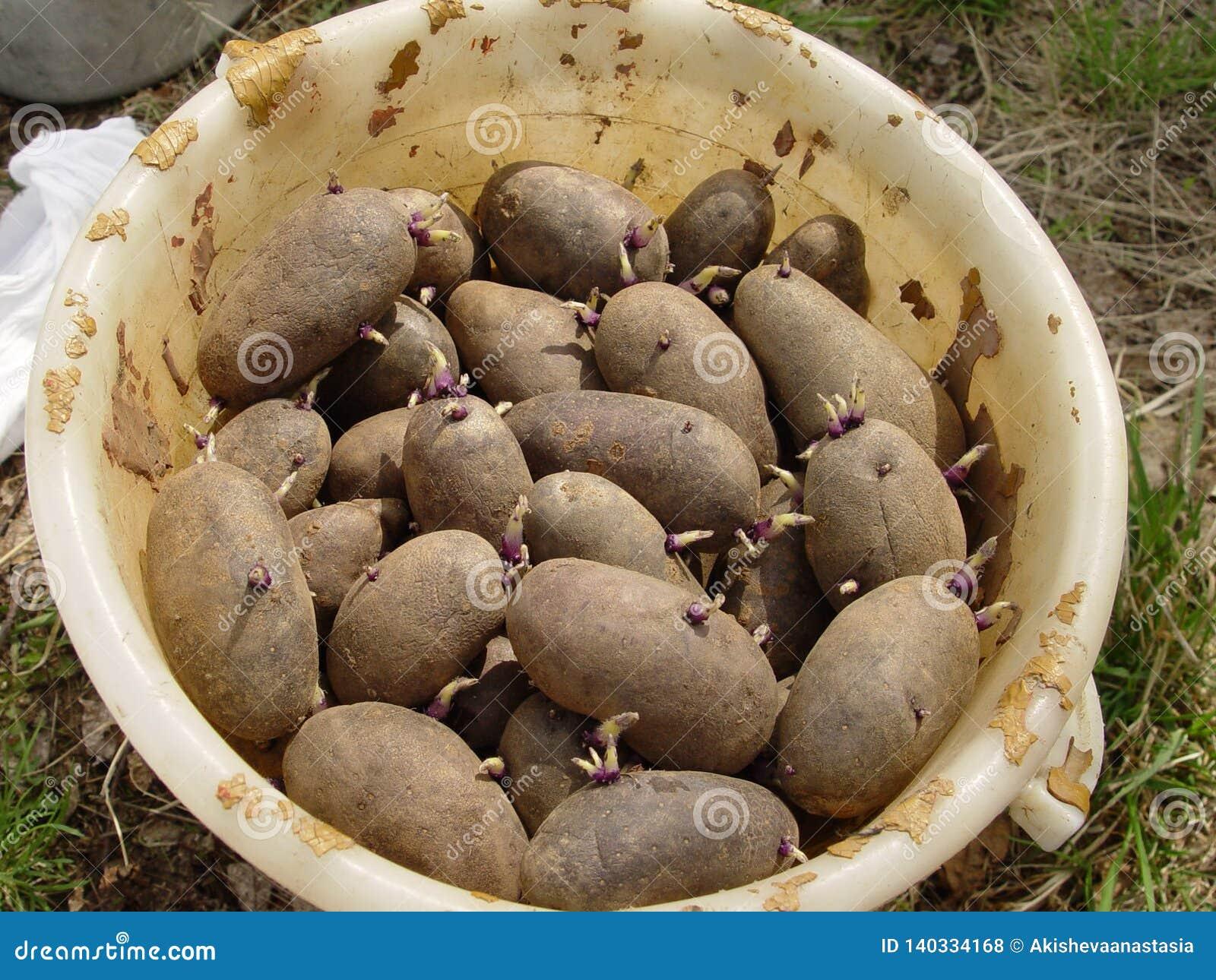 Emmer van aardappels
